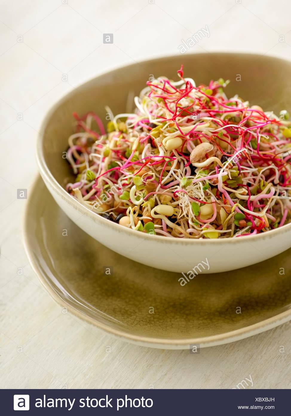 La germination des haricots dans un saladier. Photo Stock