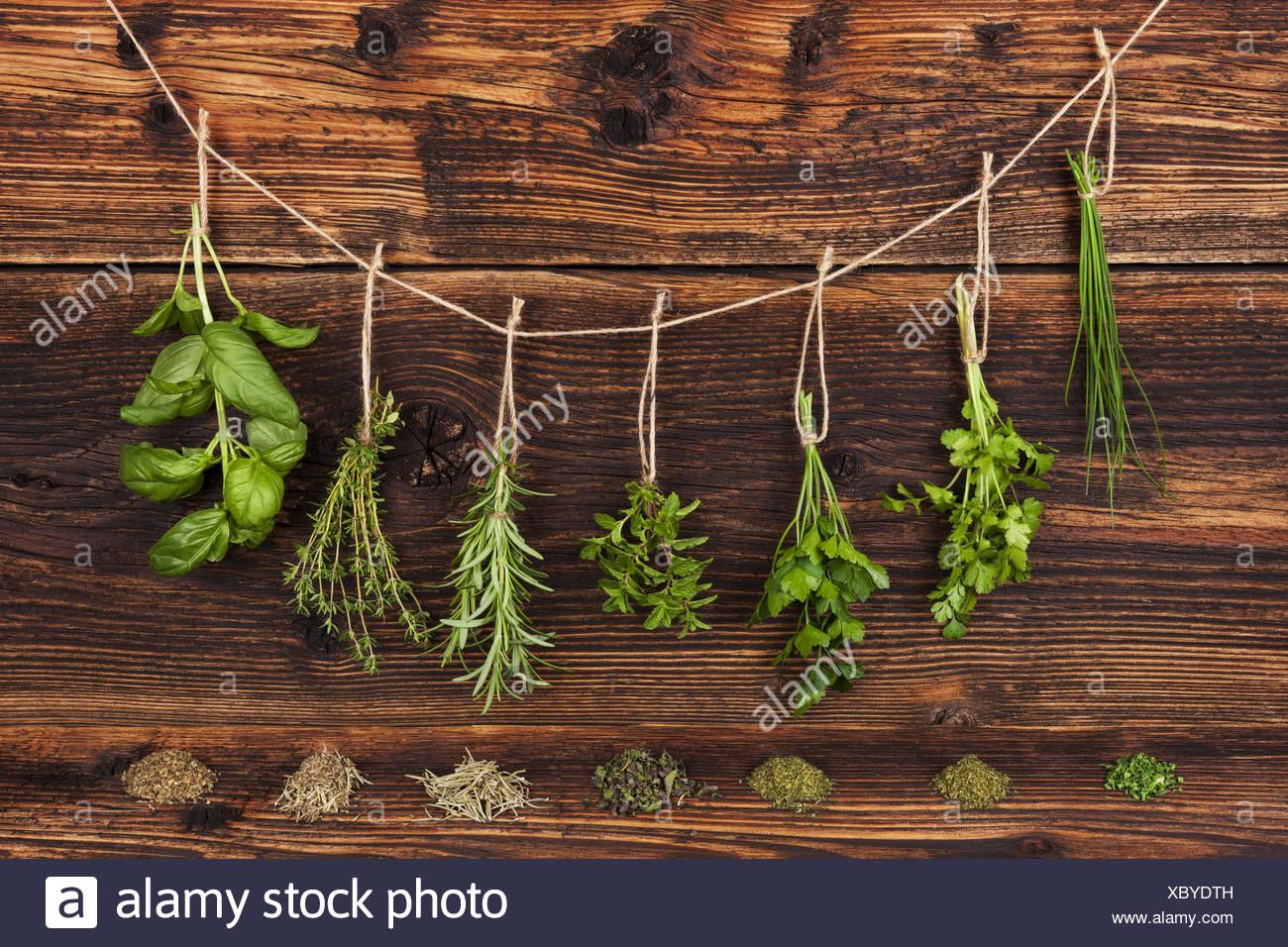 Herbes culinaires. Photo Stock