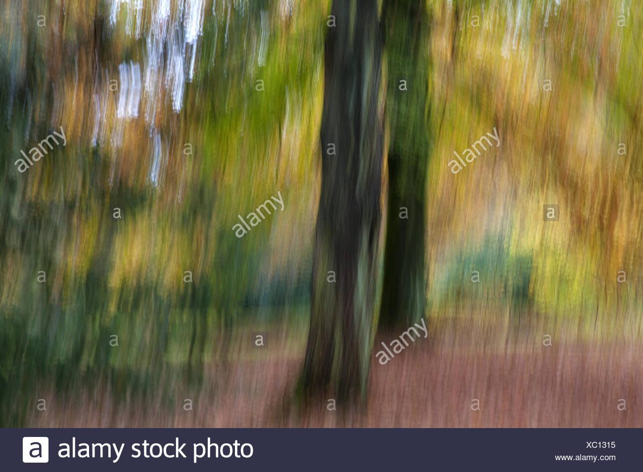 Forêt d'automne Impression Banque D'Images