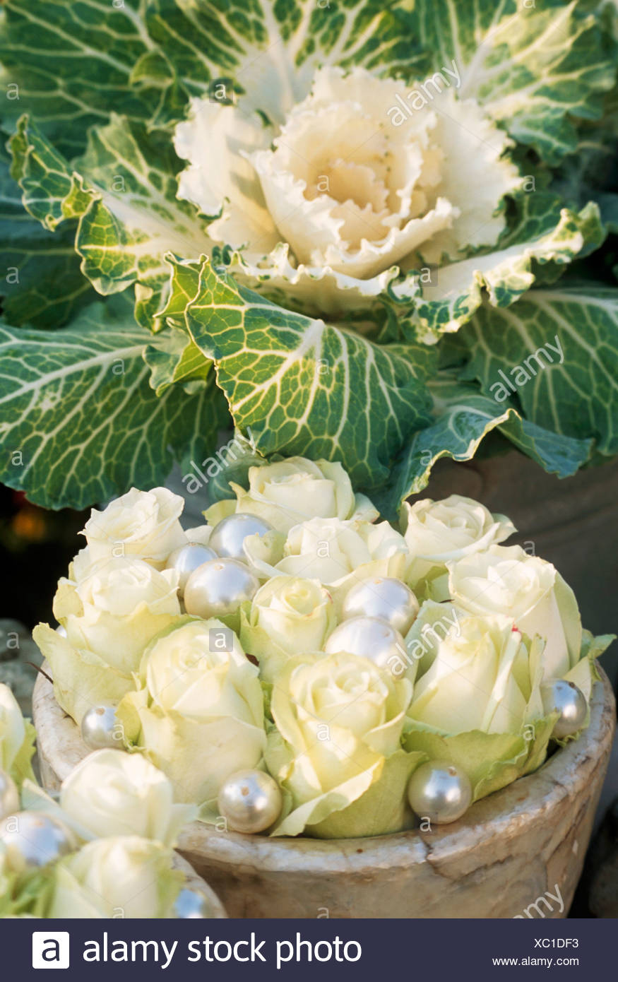 cabbage roses photos & cabbage roses images - alamy
