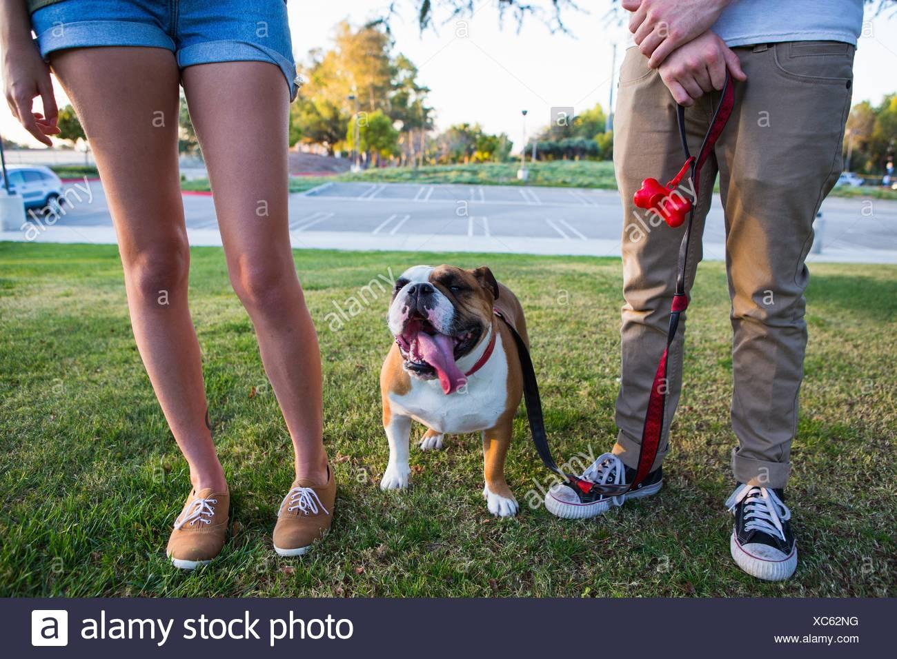 Portrait de bulldog dans parc entre les jambes du jeune couple Photo Stock