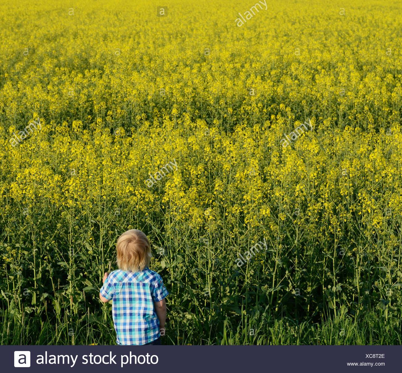 Garçon à la recherche sur le terrain, high angle view Photo Stock
