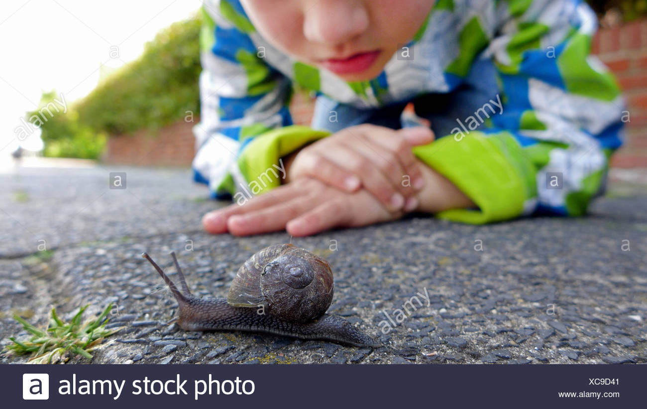 Escargot, brown, gardensnail escargot commun, l'escargot (Helix aspersa, Cornu aspersum, Cryptomphalus aspersus), petit garçon regardant un escargot sur un trottoir, Pays-Bas Banque D'Images