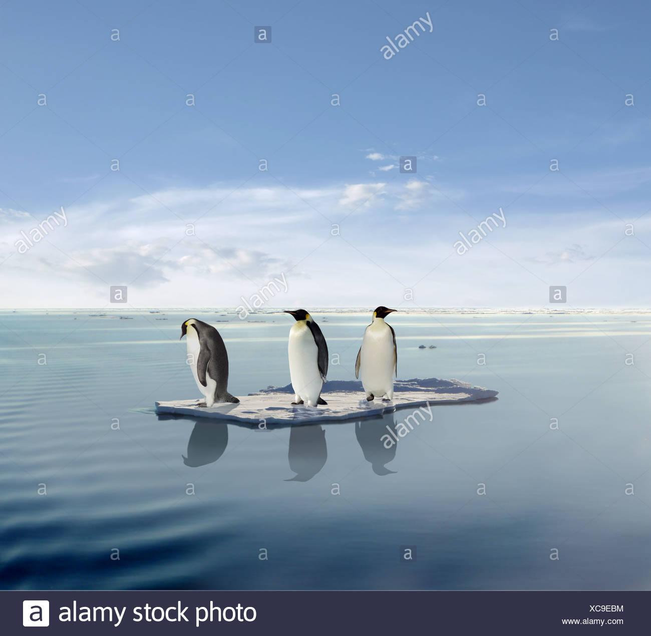 trois pingouins sur une banquise de fusion banque d 39 images. Black Bedroom Furniture Sets. Home Design Ideas