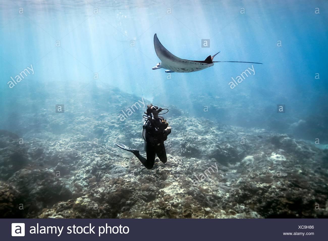 Une raie manta (manta alfredi) nager sur une scuba diver , Bali, Indonésie Photo Stock