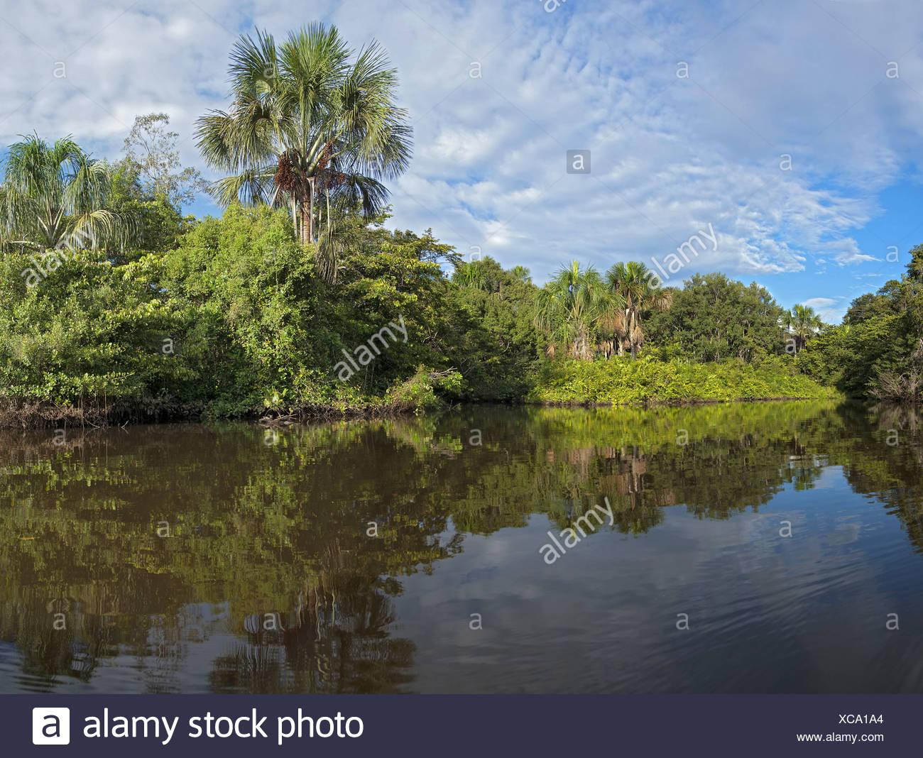 Lake Garzacocha dans la forêt tropicale, l'Équateur, la Selva Photo Stock