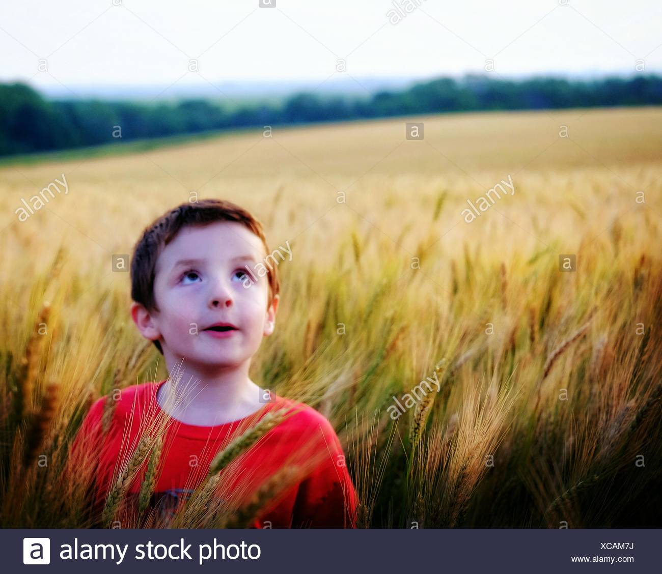 Boy Standing in Wheat Field et Looking up Photo Stock