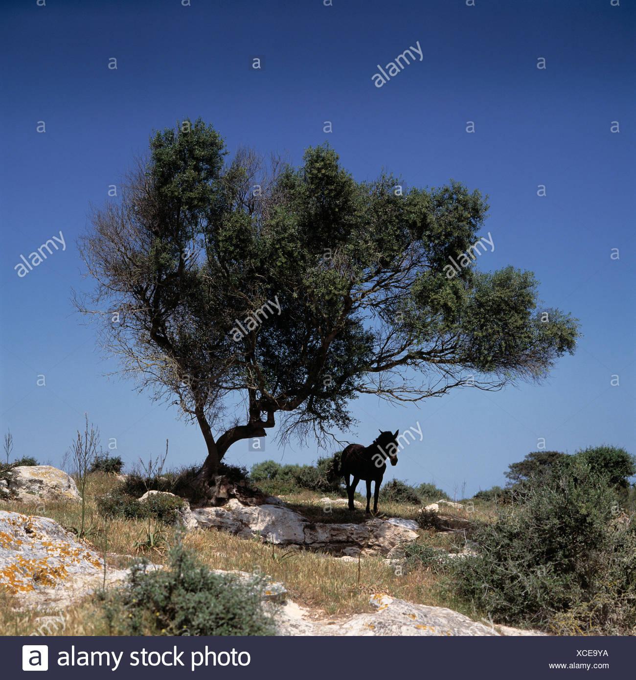 La protection des arbres cheval animaux animal protection solaire soleil ombre sud chaleur de midi midi paysage rock moi Photo Stock