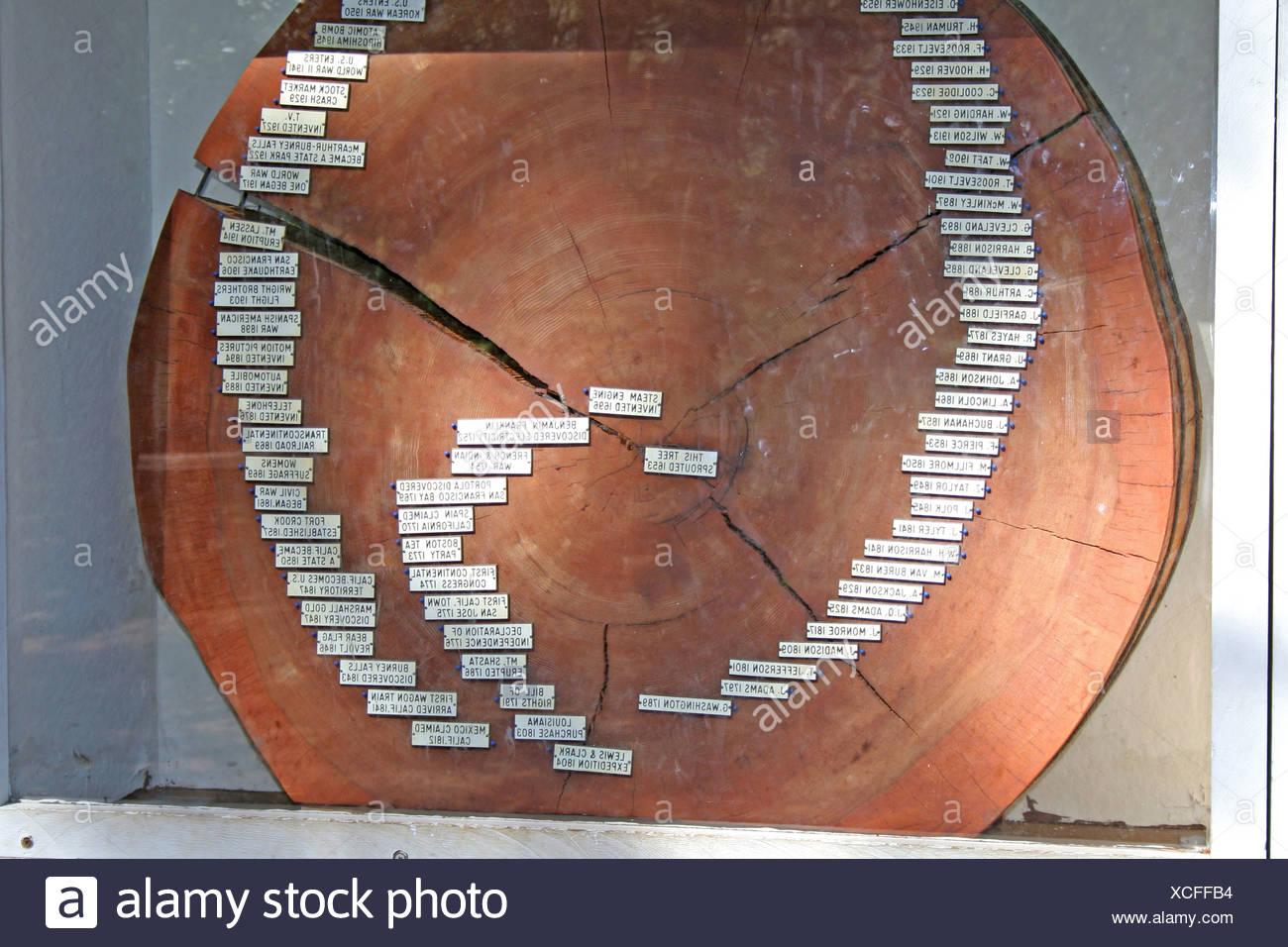 Section de pins avec joints toriques dans annoté du Mc Arthur Burney Falls Memorial State Park en Californie Photo Stock