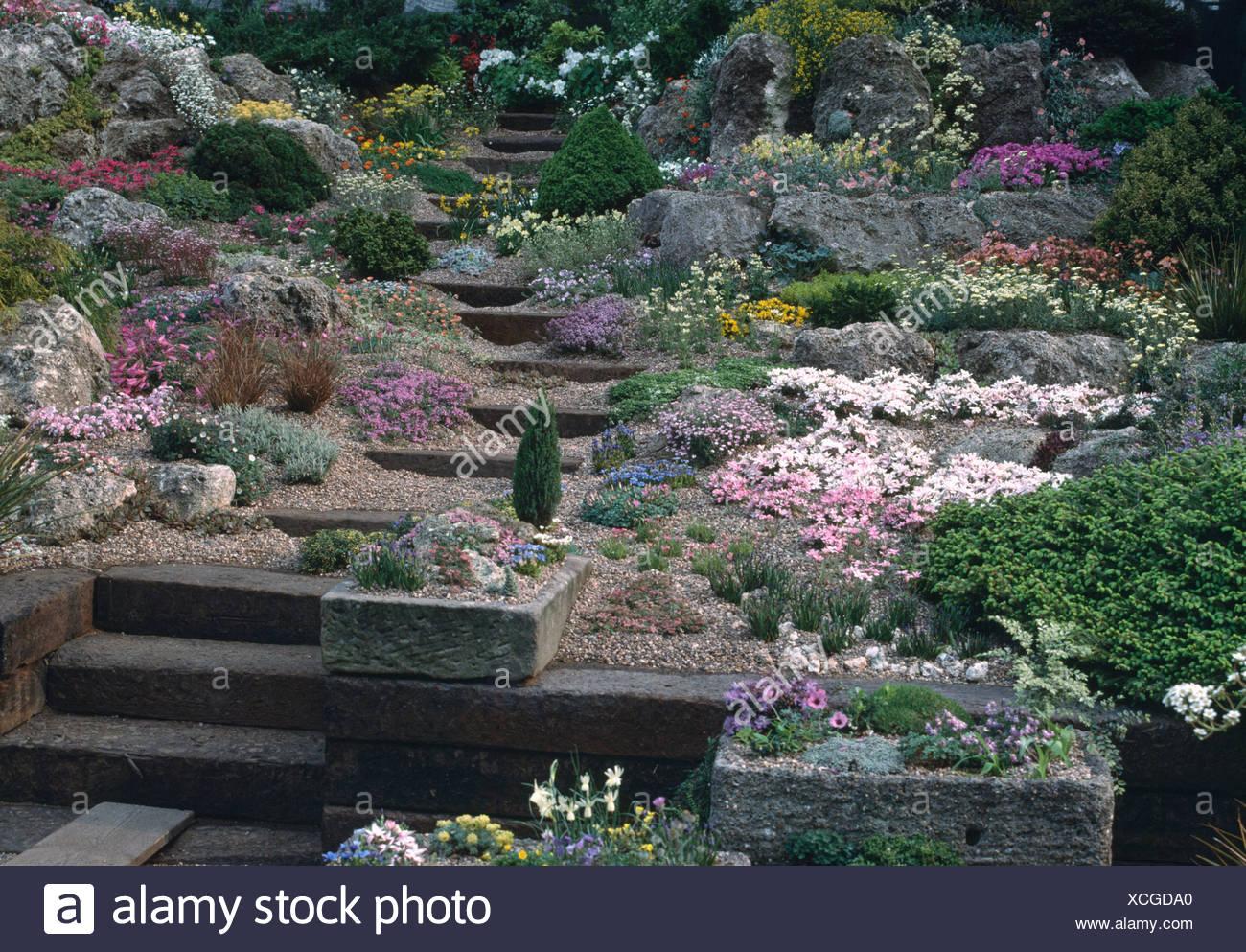 La floraison des plantes alpines en colline rocaille jardin ...