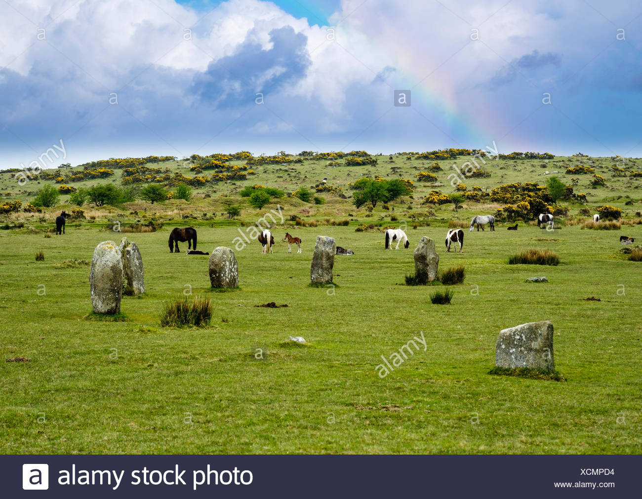 The Hurlers Steinkreis Megalithen, aus Bronzezeit, poneys, Bodmin Moor, Cornwall, Angleterre, Iles Banque D'Images