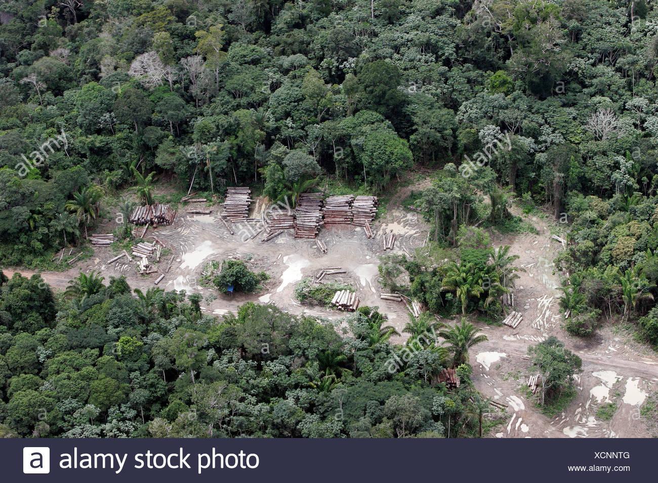 Forêt amazonienne pour jeu illégal l'agriculture journal coupe cachée dans forêt d'agence environnementale brésilienne Ibama - Photo Stock