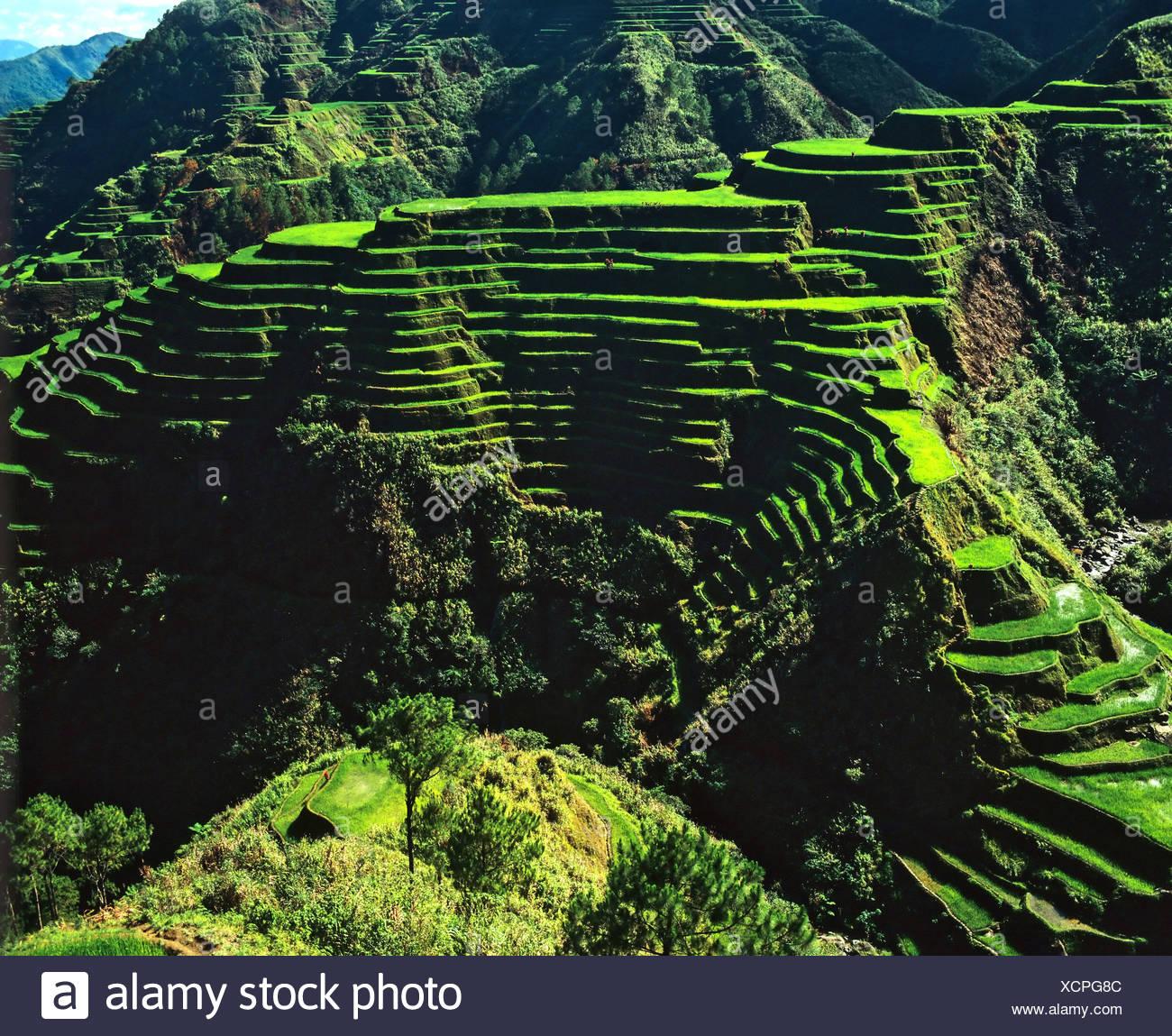 Terrasses de riz de Banaue, Ifugao, Province, Luzon, Philippines Photo Stock