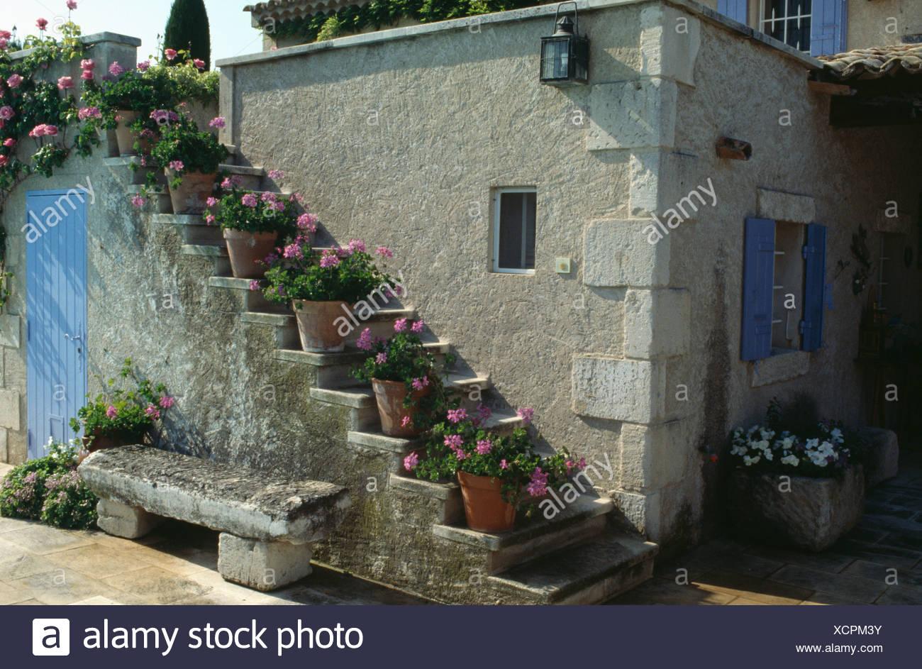 Geraniums Roses En Pots Ou Escalier Exterieur Au Dessus De Banc En