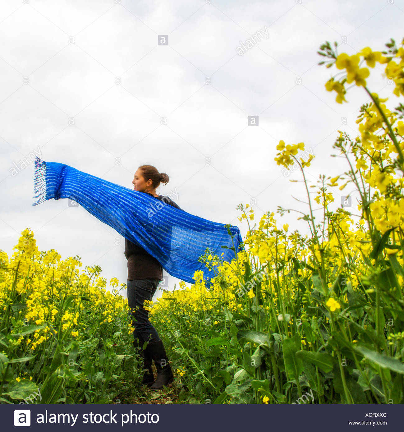 Woman holding large écharpe bleue de la vrille en champ de colza Photo Stock