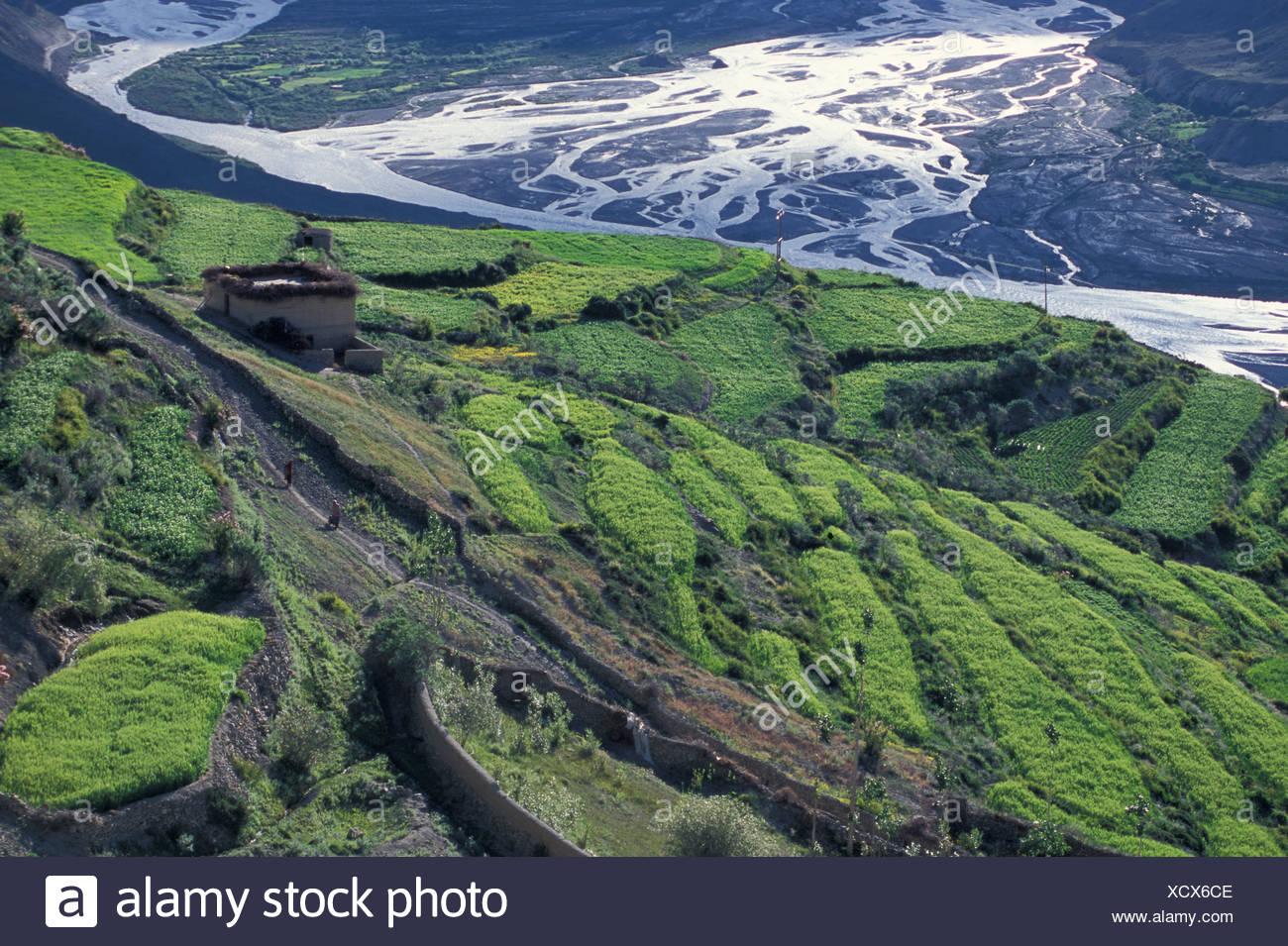 Champs, Dhankar, Spiti, Himachal Pradesh, Himalaya, Inde du Nord, Inde, Asie Photo Stock