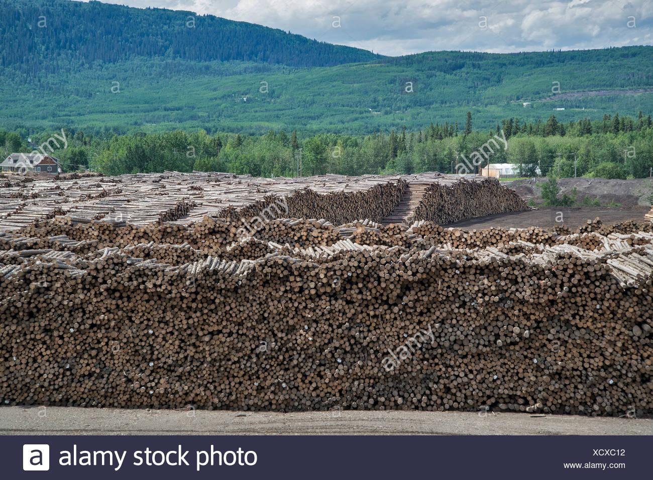 L'exploitation forestière, l'usine de Chetwynd, Colombie-Britannique, Canada, de sciage, de bois, de l'industrie Photo Stock
