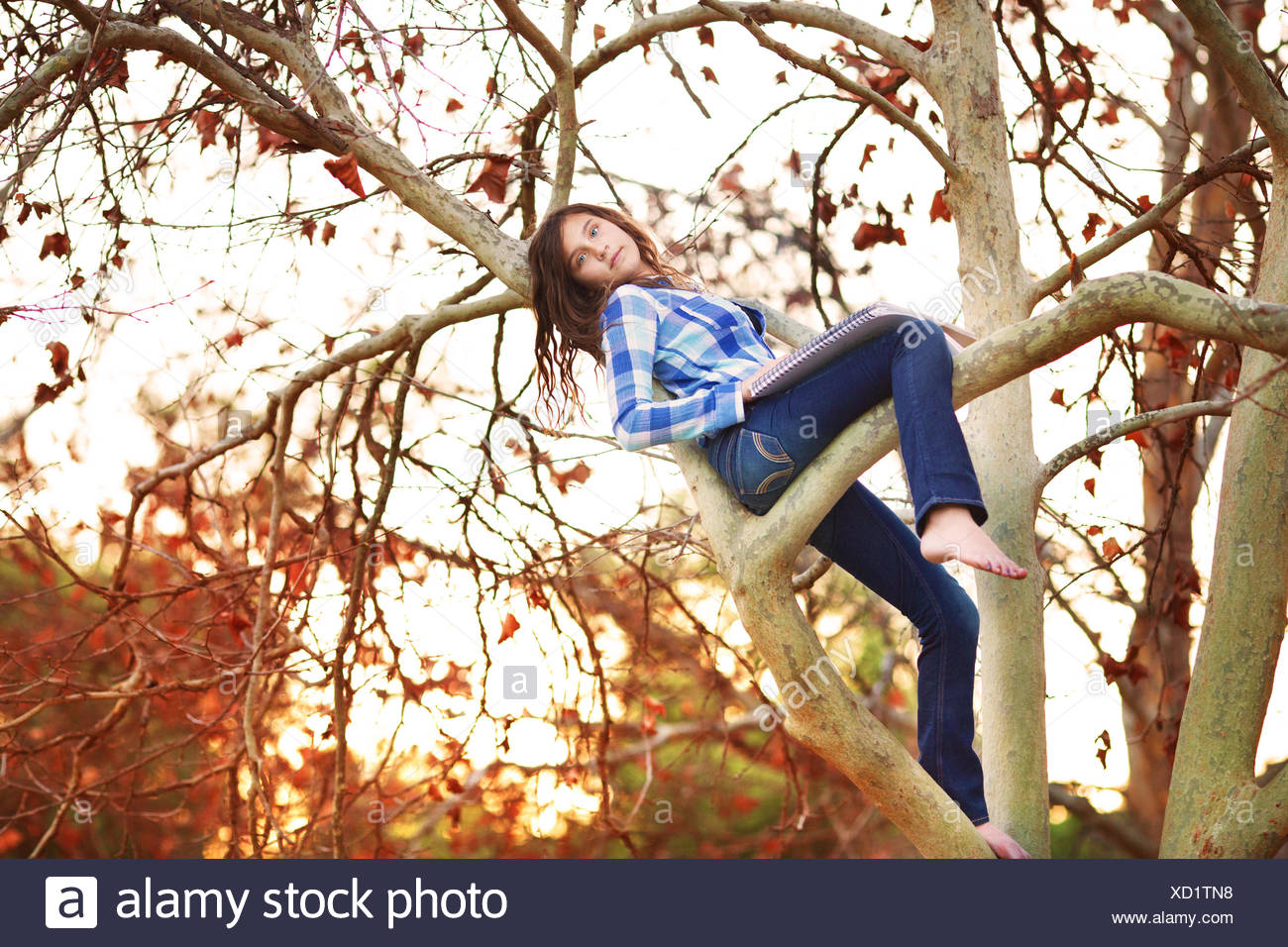 Teenage girl sitting in a tree avec feuille Photo Stock