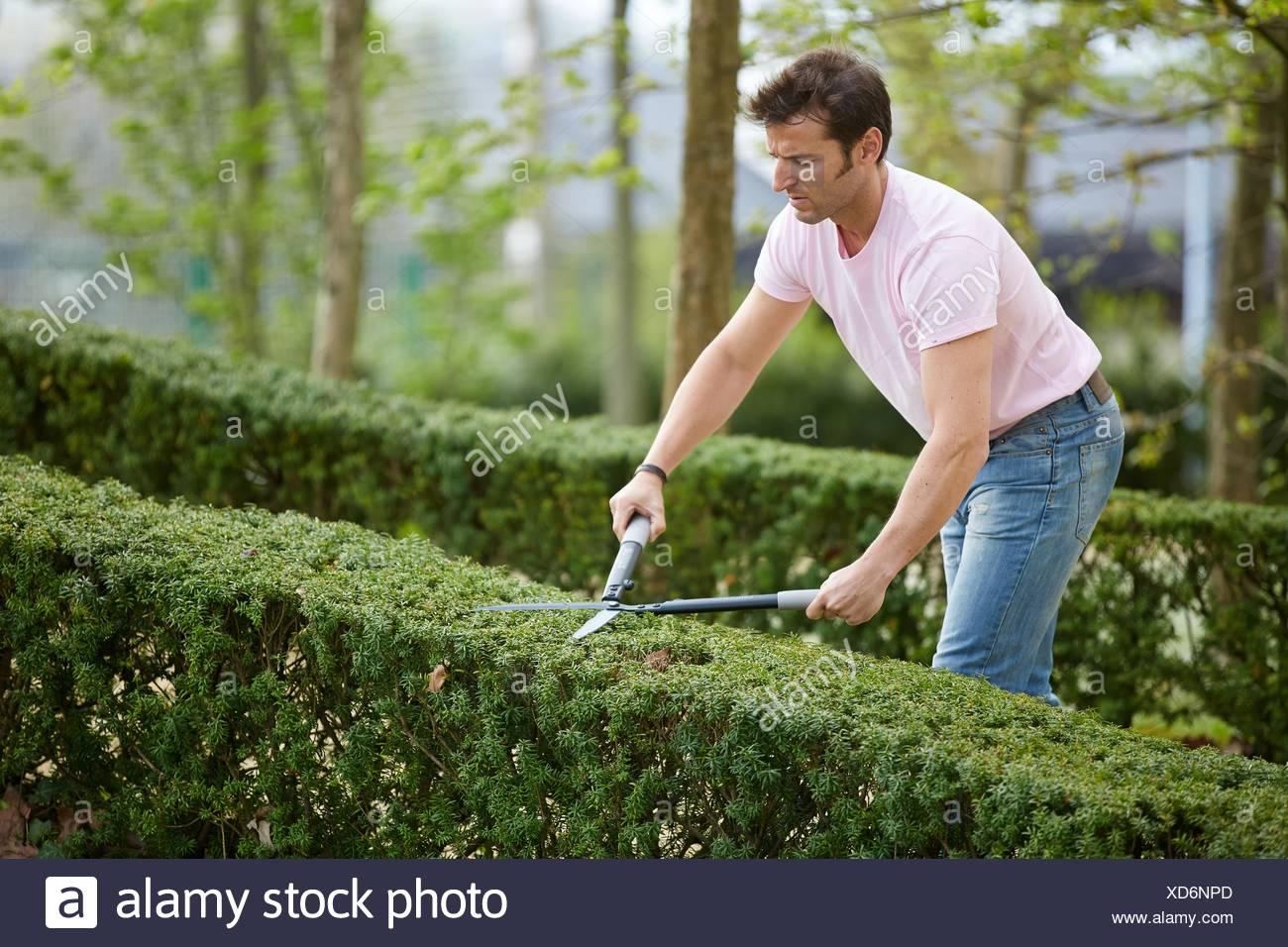 Taille haie Outil Main Jardin élagage jardinier bush Banque D\'Images ...