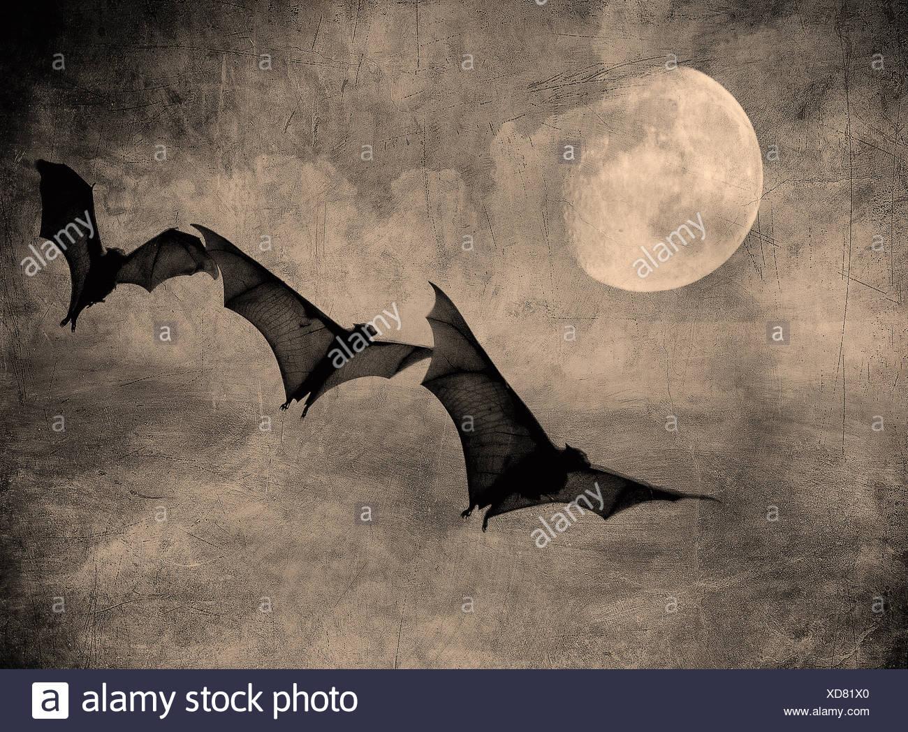 Les chauves-souris dans le sombre ciel nuageux, parfait halloween background Photo Stock