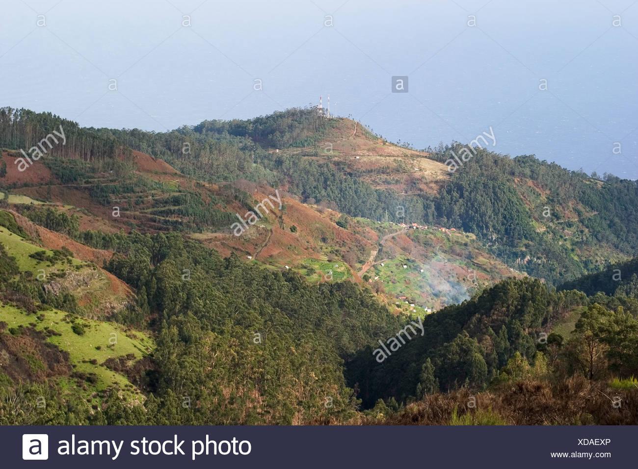 Paul da Serra le déboisement des forêts d'eucalyptus Madeira Photo Stock