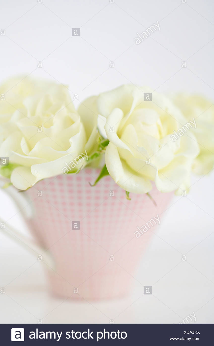 Flower vase avec des roses blanches sur fond blanc, Close up Photo Stock