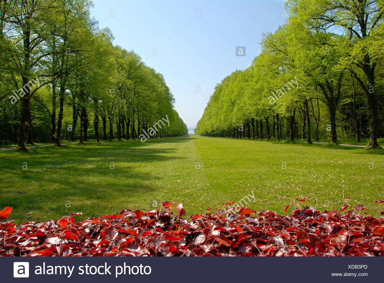 Parc avec pelouse dans l'allée forestière à Schloss Herrenchiemsee Herreninsel Chiemsee Allemagne Bavière Photo Stock