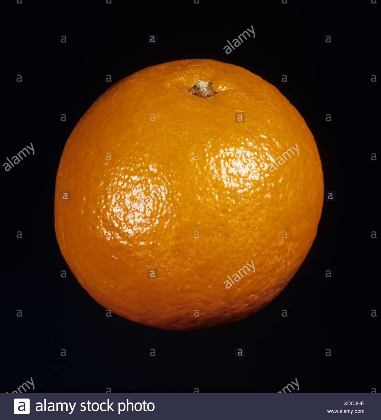 Ensemble de la variété de fruits clémentine Page Photo Stock