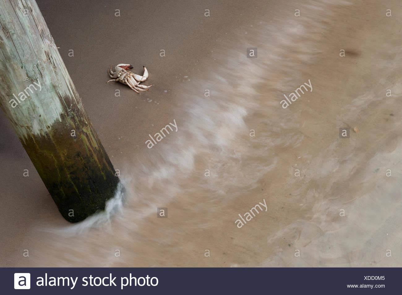 Du crabe en sable sous pier Banque D'Images