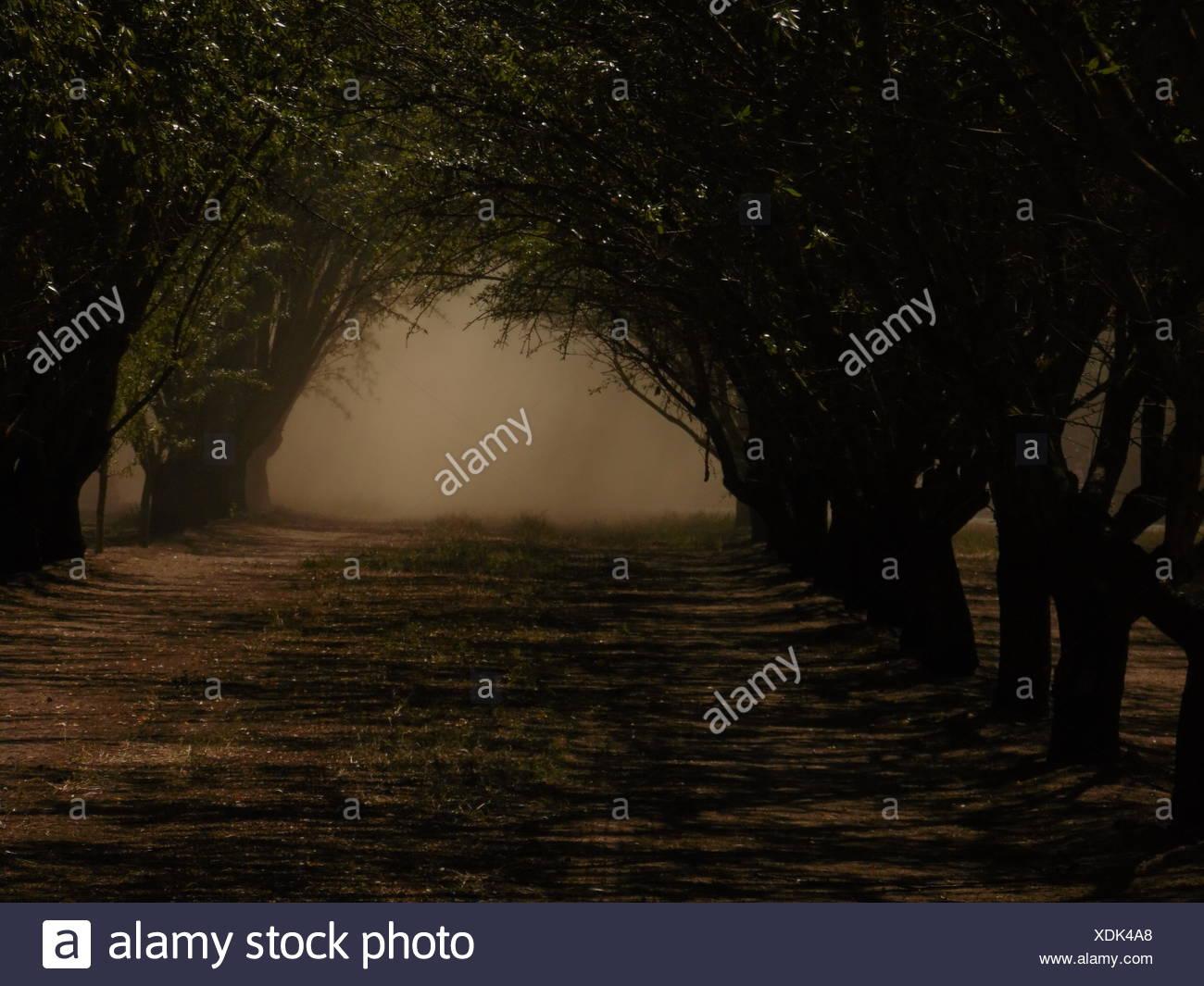 Les arbres des deux côtés d'une route Photo Stock
