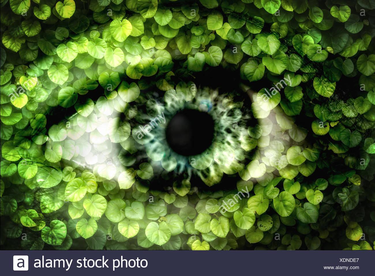 Double exposition d'un œil humain et mur de lierre Photo Stock