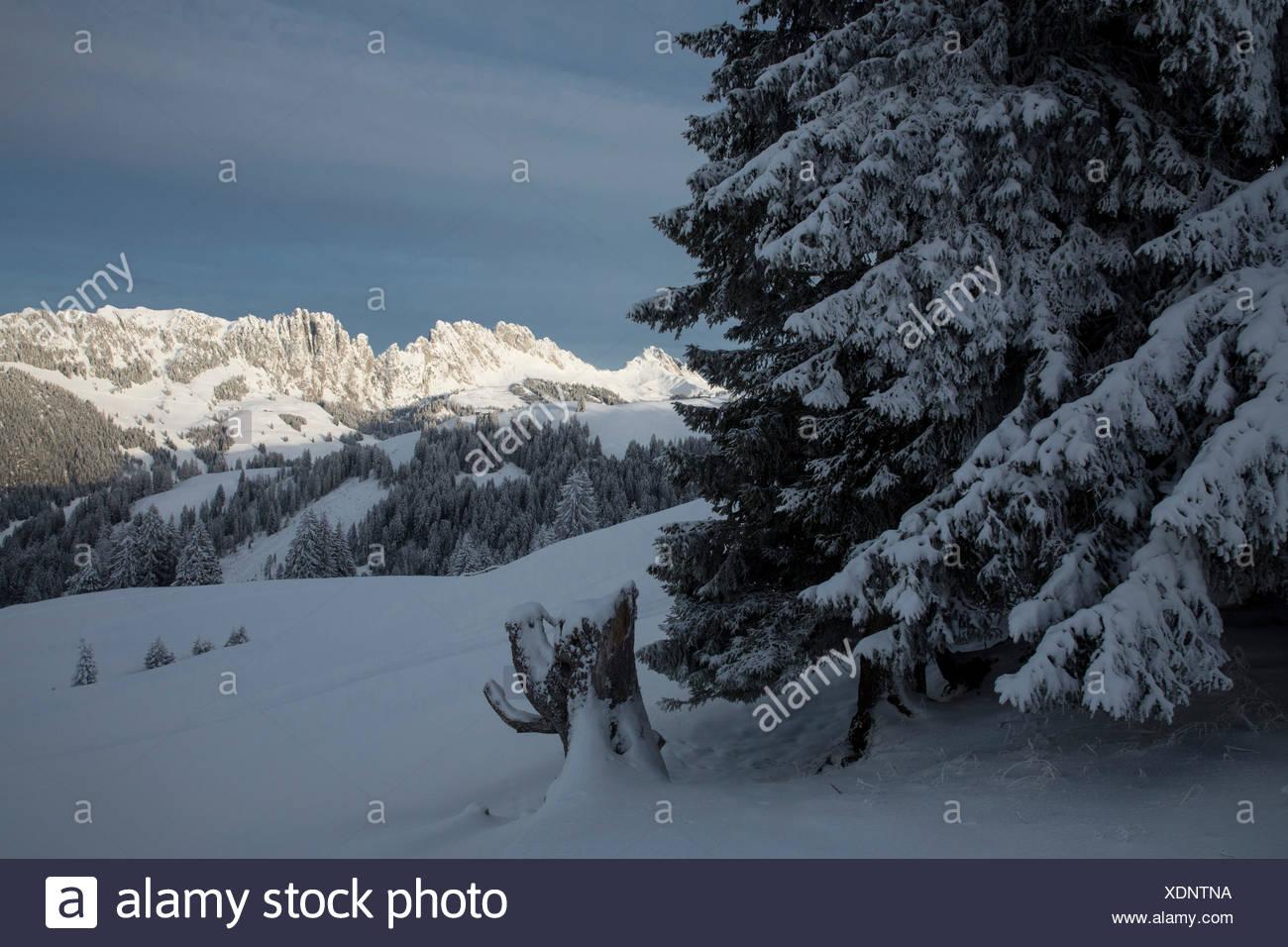 Gastlosen, Jaunpass, montagne, montagnes, Winters, canton de Berne, arbre, arbres, Suisse, Europe, Photo Stock