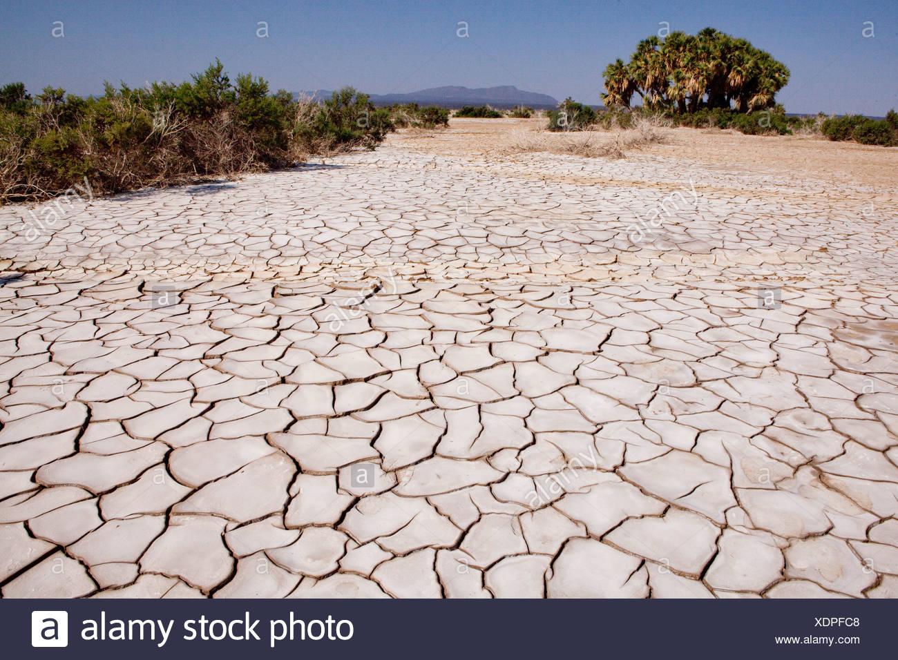 L'Afrique, l'Éthiopie, Danakil, sèchement, de larmes, de la terre, le désert Photo Stock