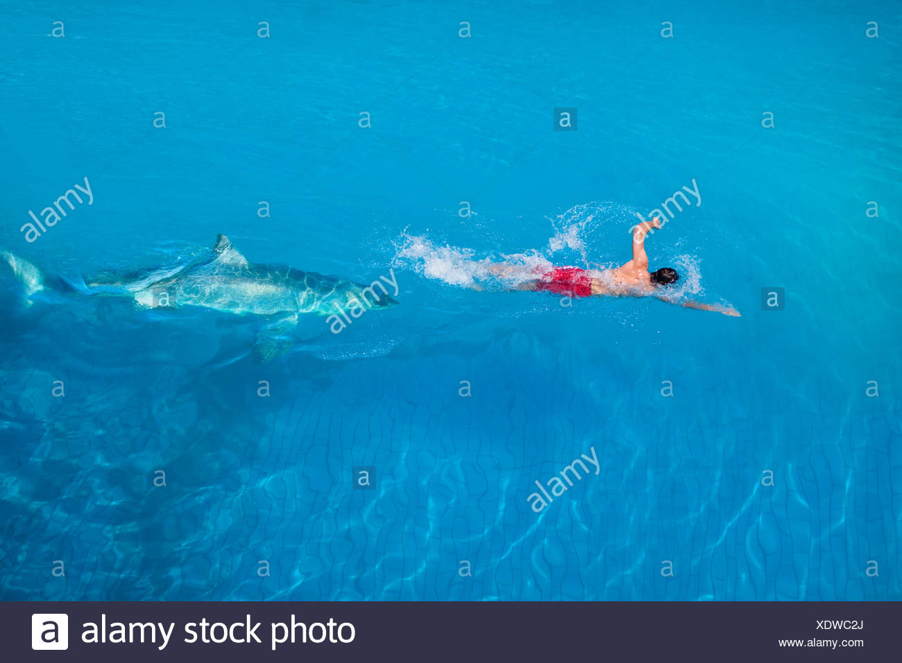Être hantée par un requin Photo Stock