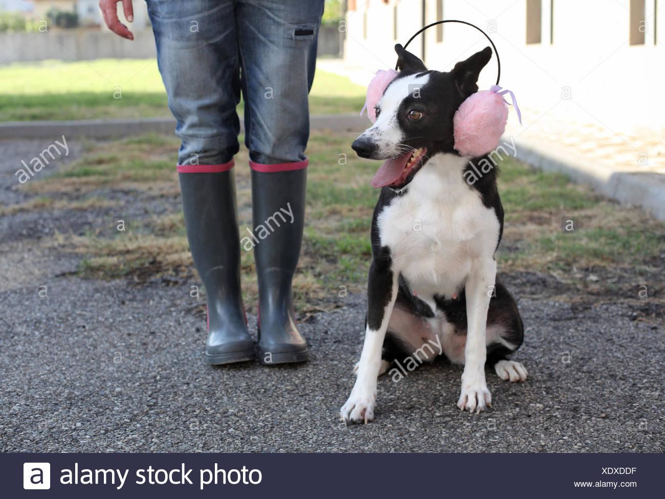 quantité limitée sortie d'usine haute couture Femme debout avec un chien portant des cache-oreilles rose ...