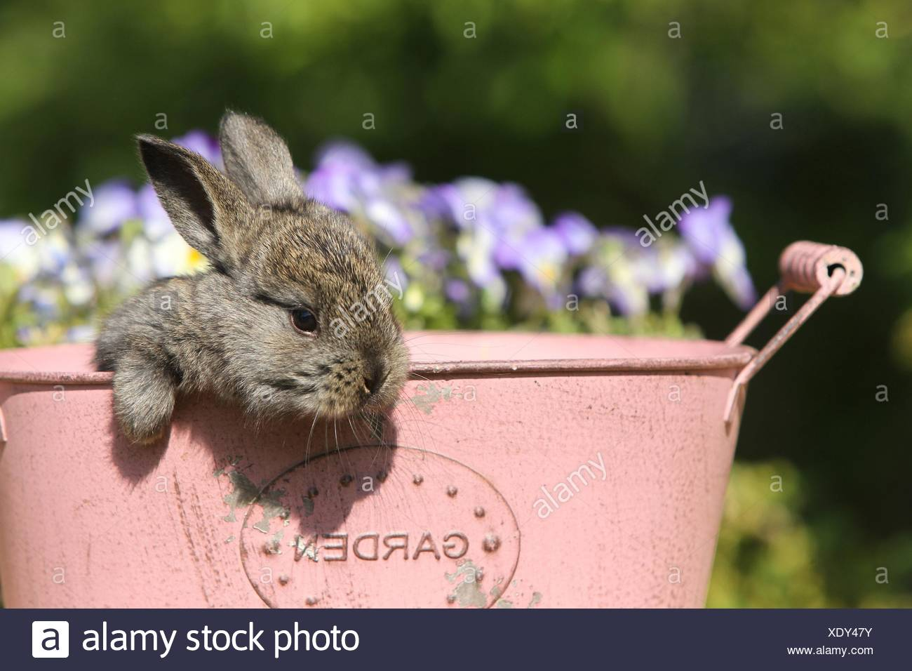 jeune lapin Photo Stock
