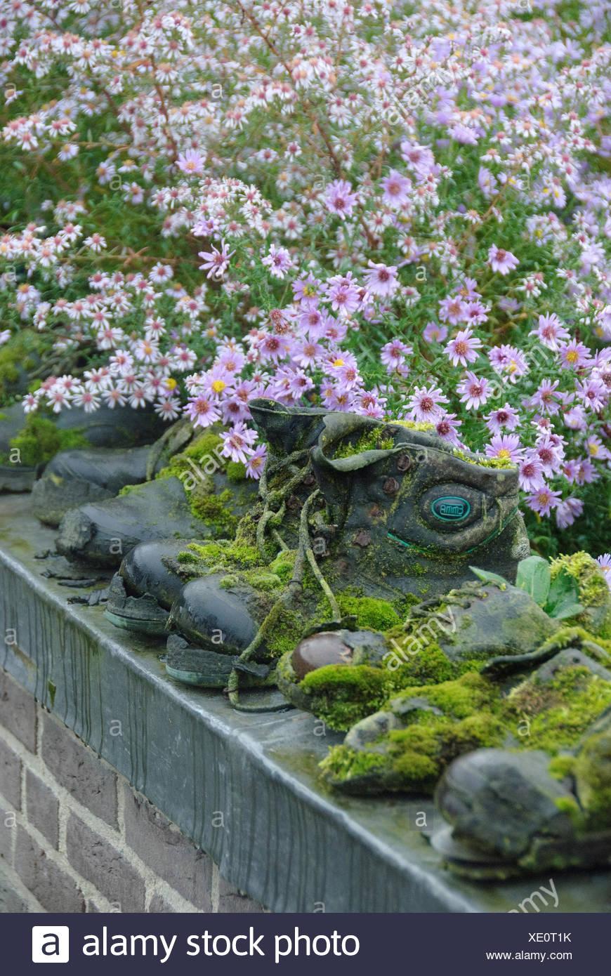 Chaussures jardin moussu sur un mur dans le jardin Photo Stock