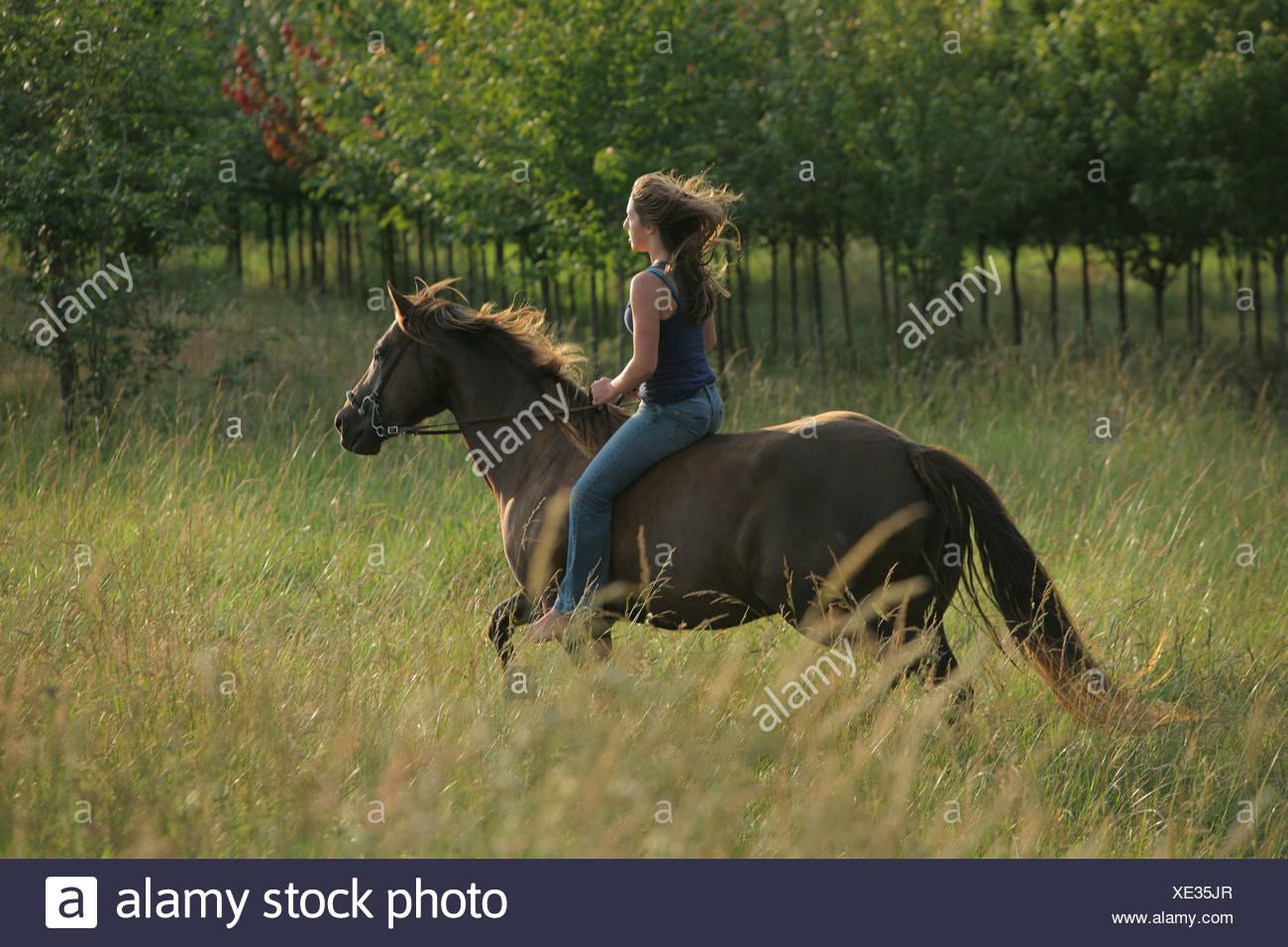 Une adolescente un cheval dans le champ; Troutdale Oregon United States of America Photo Stock