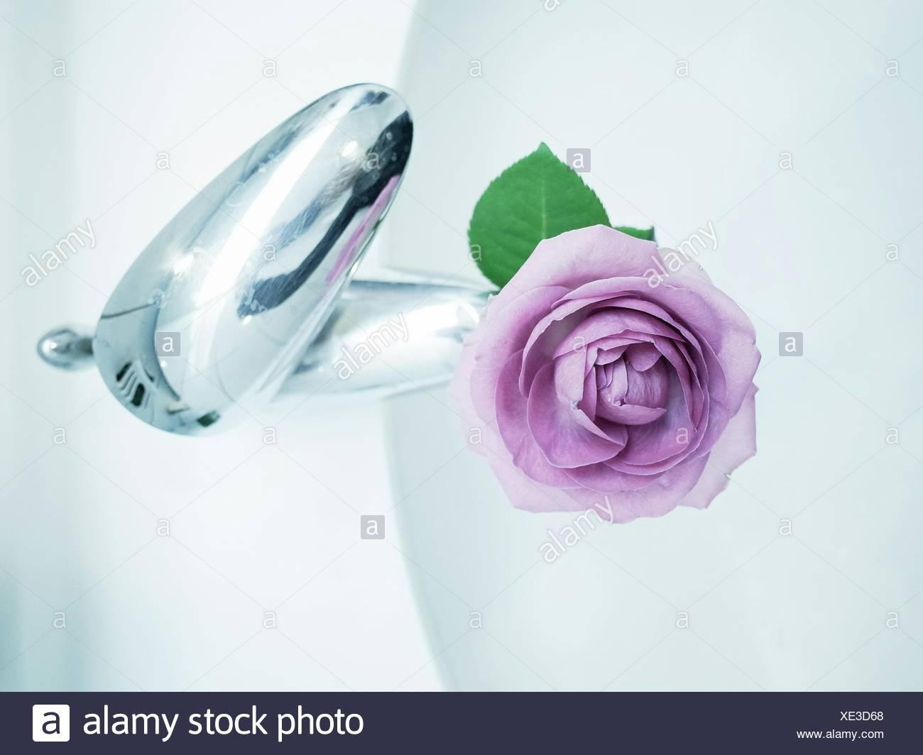 Tourné directement au-dessus du robinet sur Rose pourpre Photo Stock
