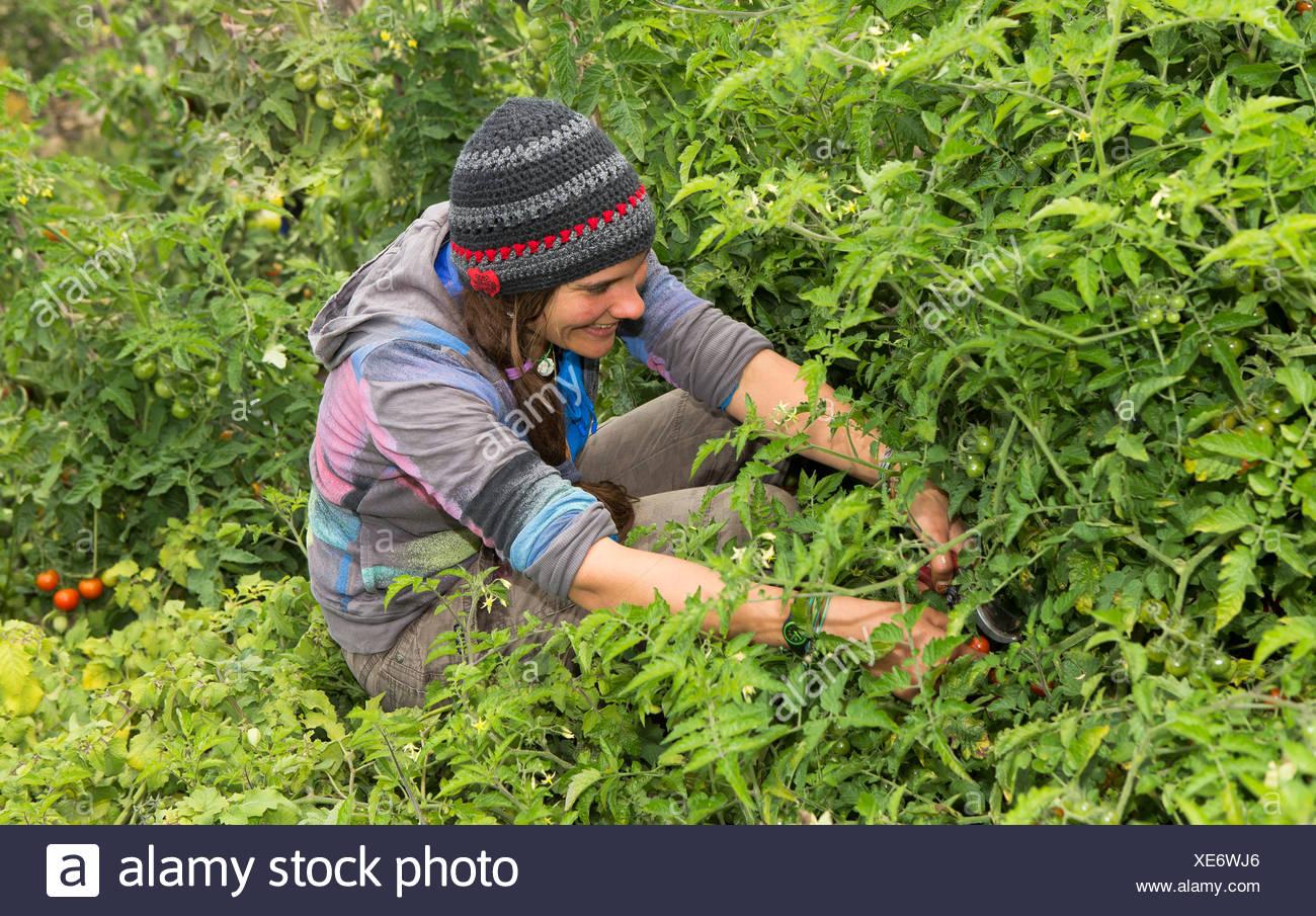 L'Autriche, Schiltern, jardinier de rechange au travail Photo Stock