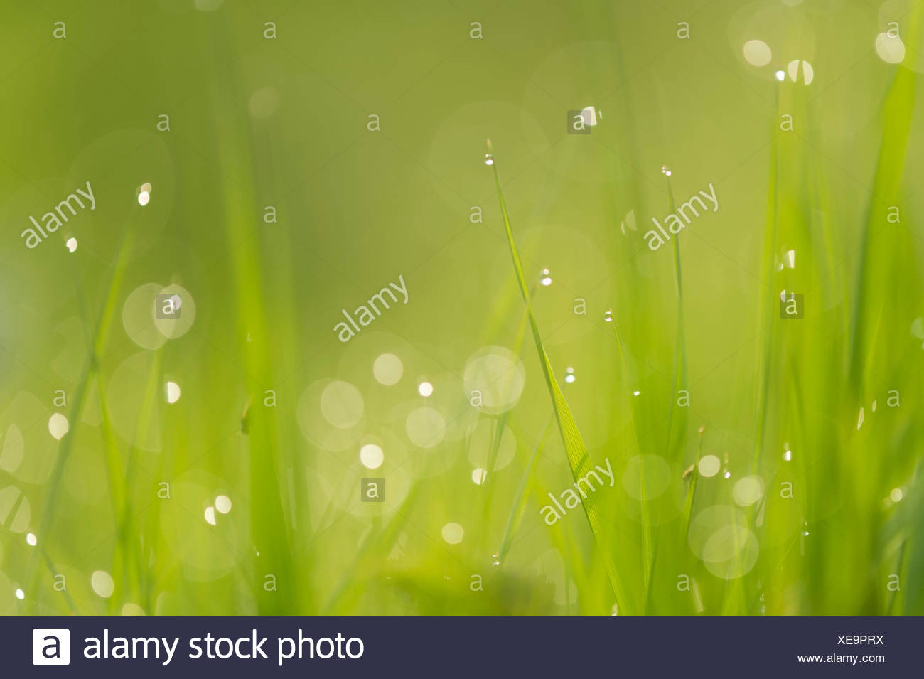 Brins d'herbe, Basse-Saxe, Allemagne Banque D'Images