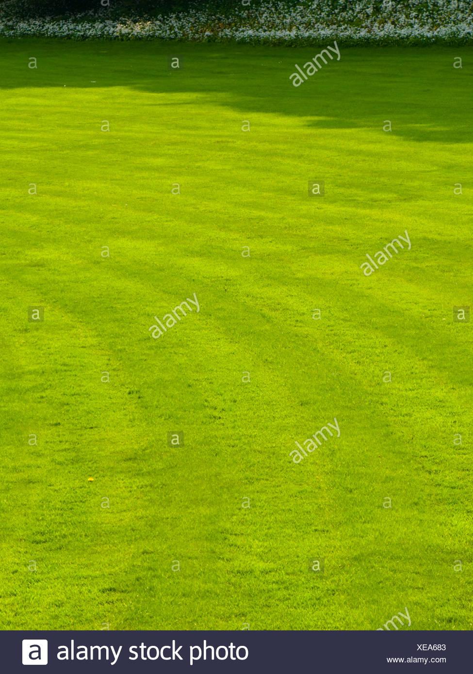 Tonte de pelouse avec des lignes dans l'herbe Photo Stock