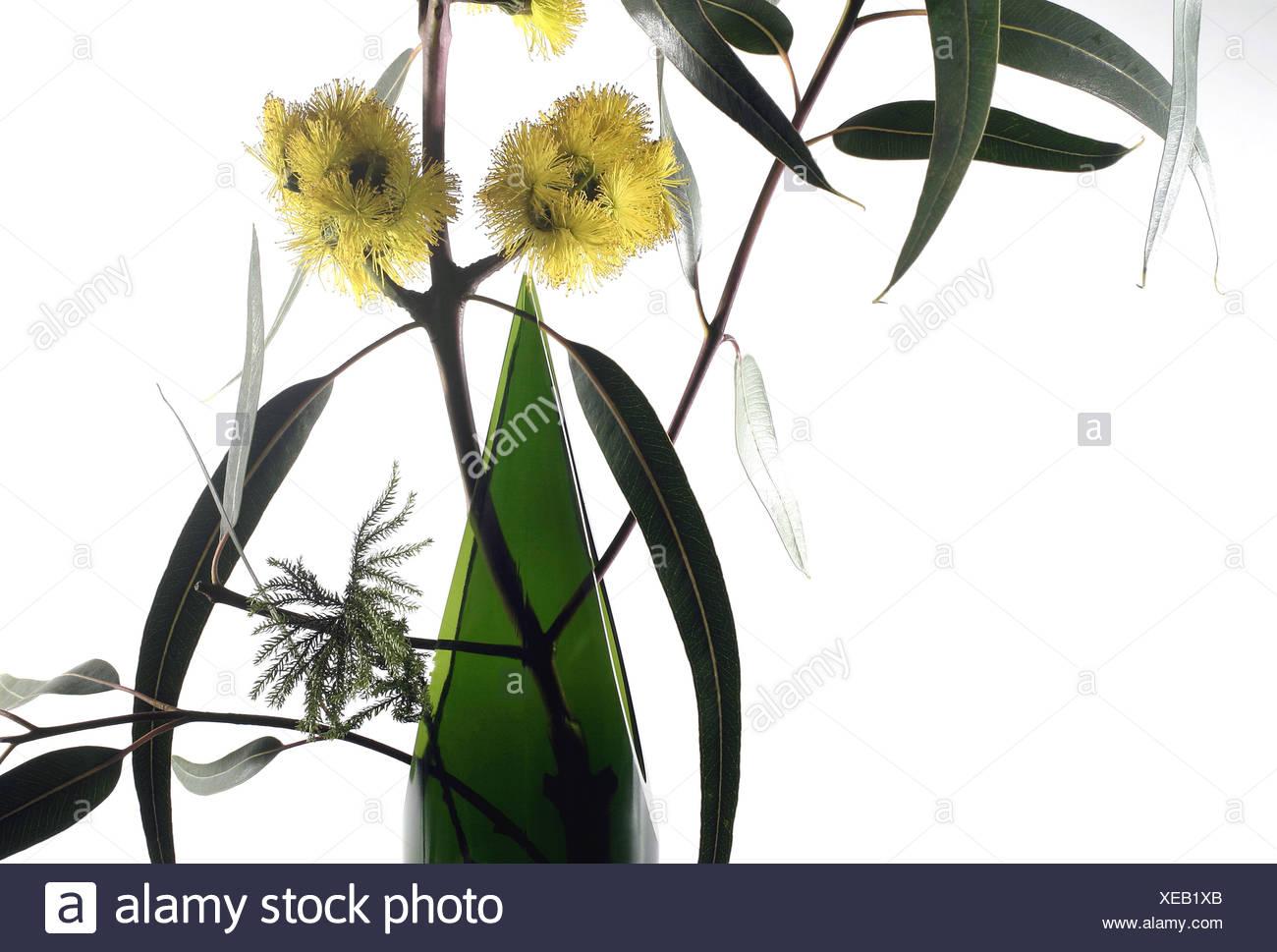 branche d'eucalyptus dans un vase banque d'images, photo stock