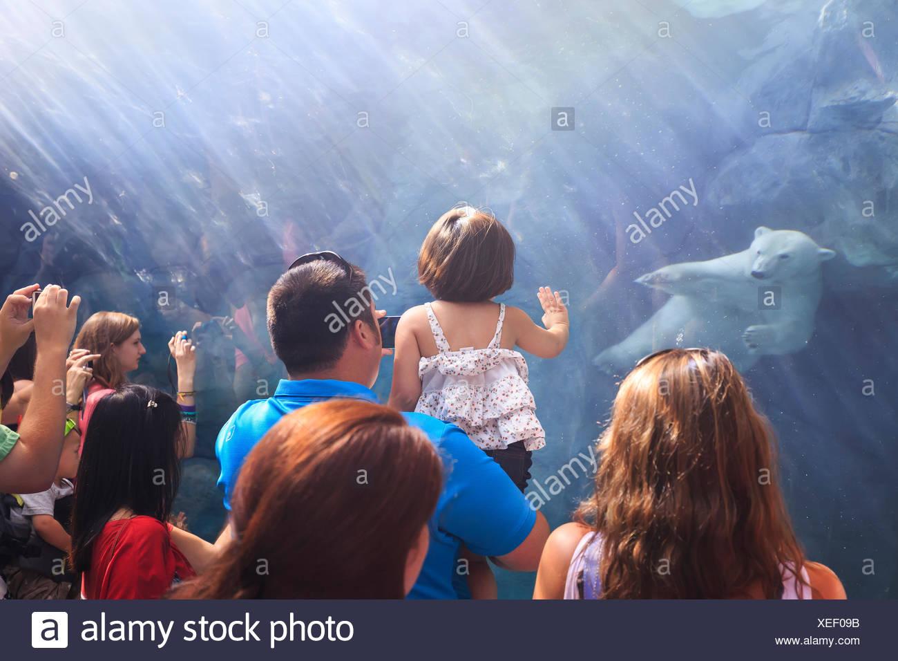 Les gens qui regardent un ours polaire à nager sous l'eau le voyage à Churchill, Zoo du Parc Assiniboine, Winnipeg, Manitoba, Canada Banque D'Images