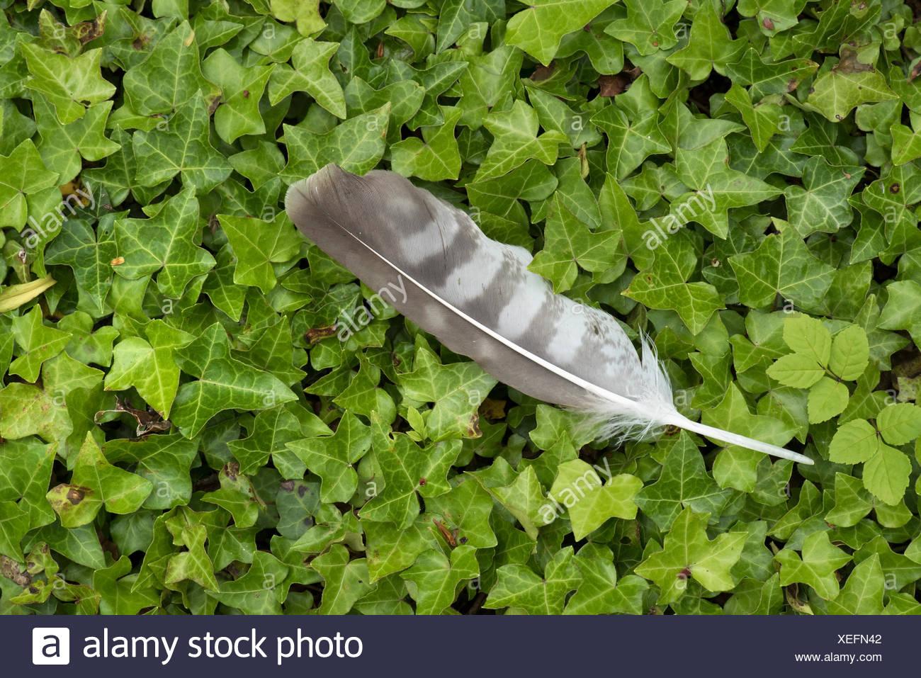 Plume d'oiseau sur le marbre UK Photo Stock