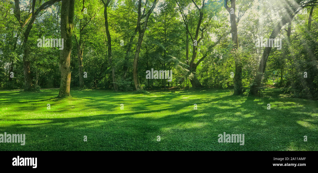 Bella e verde prato circondato da alberi con raggi di sunbeam, paesaggio in Englischer Garten a Monaco di Baviera Foto Stock