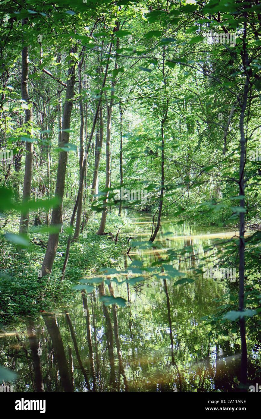 Lussureggiante vegetazione estiva incorniciare le acque di un piccolo canale a Englischer Garten di Monaco di Baviera, paesaggio in luce posteriore con il sole la riflessione sulla wate Foto Stock