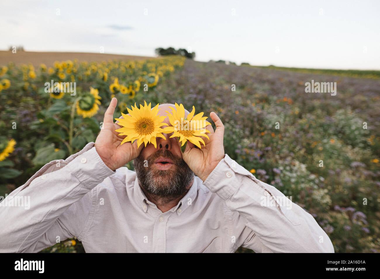 Giocoso uomo che copre la sua gli occhi con girasoli in un campo Foto Stock