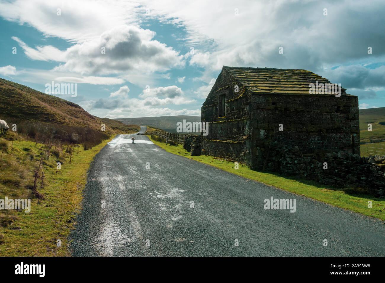Il vecchio fienile e le pecore in strada a Birkdale in Swaledale superiore sulla B6270 sopra Nateby, Yorkshire Dales Foto Stock