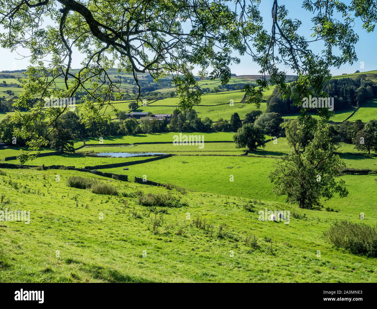 Terreni agricoli in Nidderdale da Wath Road vicino al ponte Pateley North Yorkshire, Inghilterra Foto Stock